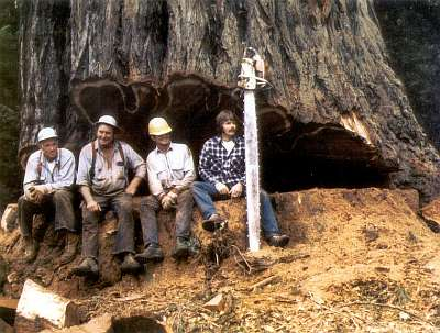 Old Growth Logging