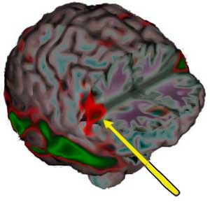 Mirror neurons (wikipedia)