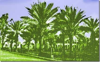 ridvan-garden-baghdad